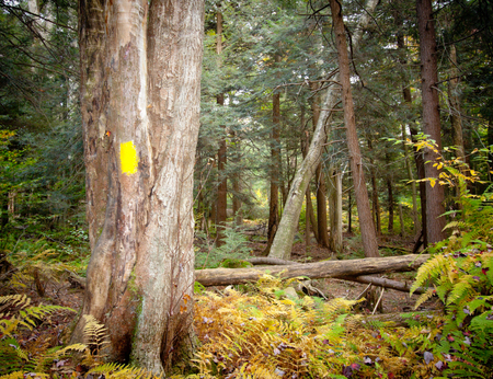 knocked over: Trees blown over on a trail after a storm  Stock Photo