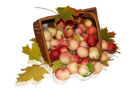 Basket with apples and maple leaves
