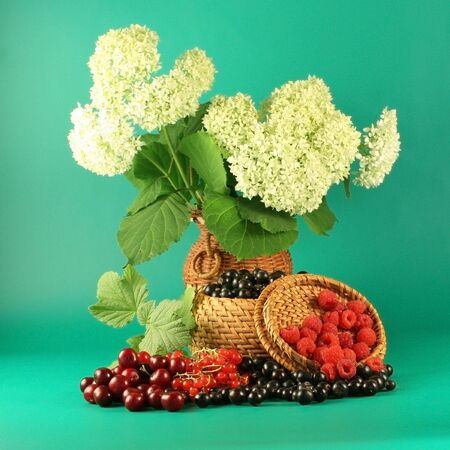 Bouquet of a hydrangea and berries of a red currant, a black currant, a raspberry and a cherry.  photo