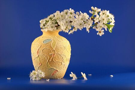 Vase with a branch of a blossoming cherry photographed on a dark blue background.