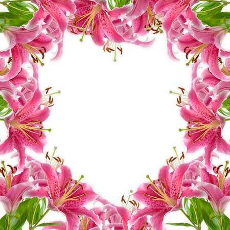 Frame of pink lilies on a white background