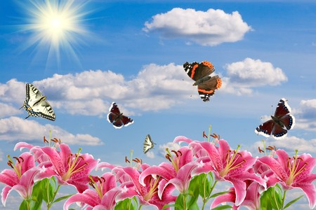 Pink lilies and a butterflies on the background of cloudy sky with the sun