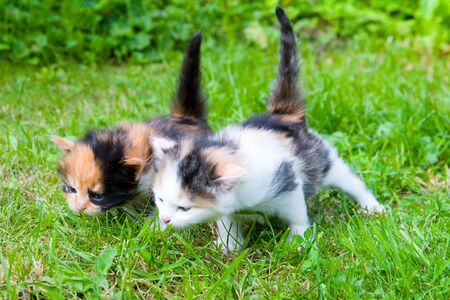 Two little kittens on the green grass Stock Photo