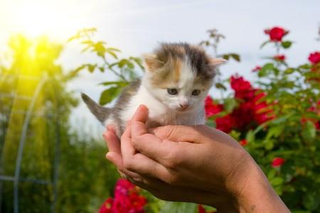 Kleine kitten in handen tegen de hemel en de zon