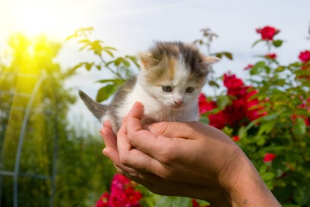 Little kitten in hands against the sky and sun Stock Photo