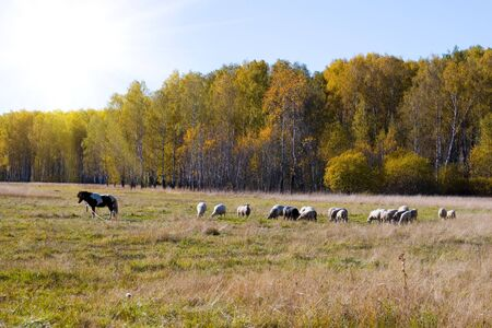 Beautiful autumn landscape with pasture near forest photo