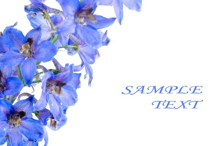 Blue flower isolated on a white background Stock Photo