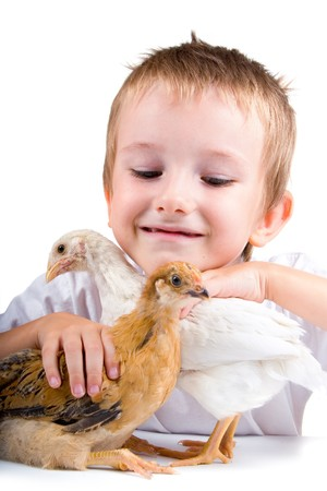 Funny boy with chickens, isolated on a white background
