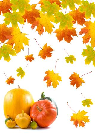 Maple leaves and pumpkins on a white background Stock Photo