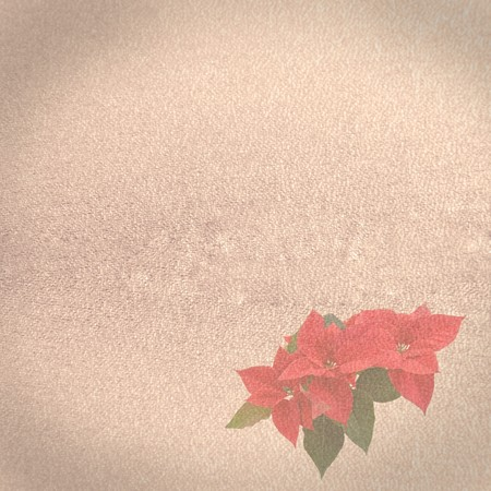 old paper background with red poinsettia photo