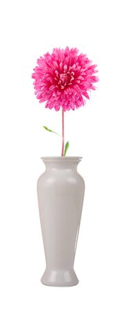 Flower in a vase isolated on white background photo