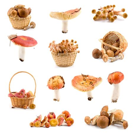 Set of mushrooms isolated on a white background