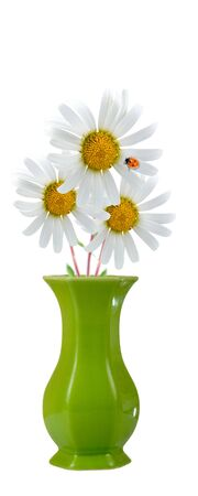 Bouquet of daisies and ladybird isolated on white background photo