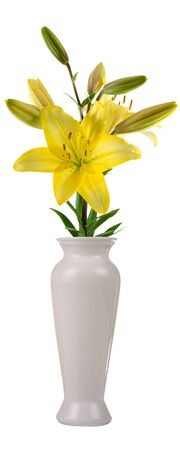 Flower in a vase isolated on white background Stock Photo - 7999224