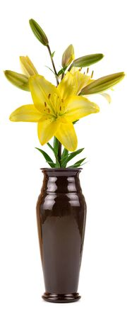 Flower in a vase isolated on white background Stock Photo - 7999262
