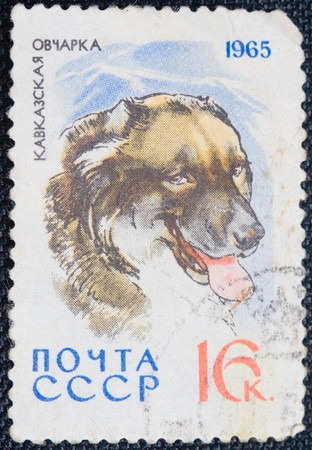 caucasian shepherd: USSR- CIRCA 1965: A stamp printed by USSR shows the Dog Caucasian Shepherd, stamp is from the series, circa 1965 Stock Photo