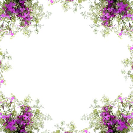Frame of wild flowers on a white background Stock Photo