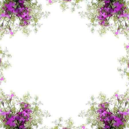 clavel: Marco de flores silvestres sobre un fondo blanco
