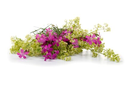 Beautiful bouquet of wild flowers on a white background Stock Photo