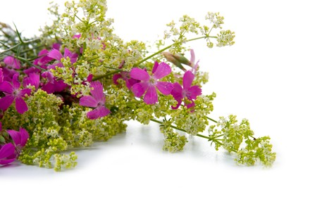 Beautiful bouquet of wild flowers on a white background Stockfoto