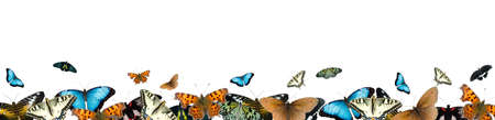 Border of butterflies isolated on a white background photo