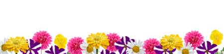 petunia wild: Border of flowers isolated on white background Stock Photo
