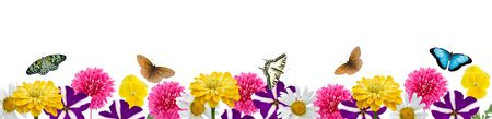 Border of flowers and butterflies isolated on a white background