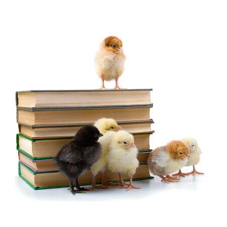 Chickens and books. The concept: new younger generation Stock Photo