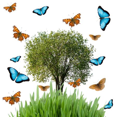 Tree, grass and butterflies  isolated on a white background
