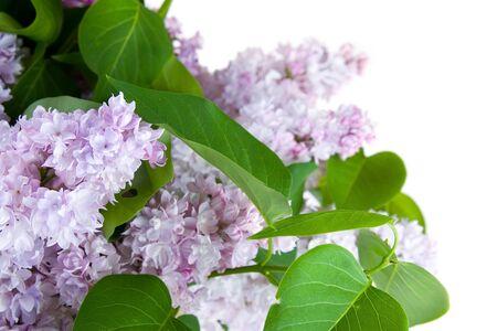 Beau bouquet de printemps isolé sur fond blanc Banque d'images