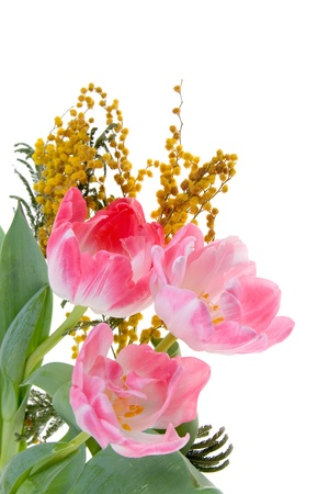 Bouquet of mimosa and tulips  on a white background photo