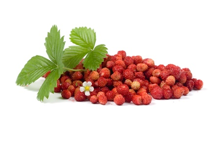 Wild strawberries on a white background photo