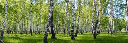 zomer berk boslandschap panorama Stockfoto