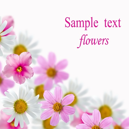 Beautiful flowes on a white background photo