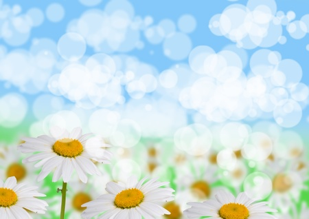 Beautiful daisies on a blue and green  background photo