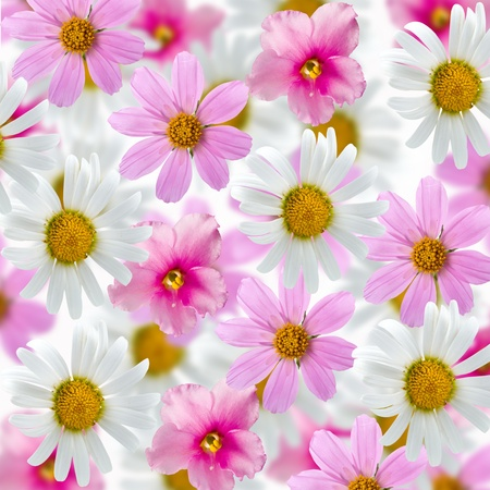 Beautiful flowes on a white background