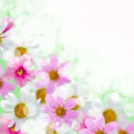 Beautiful flowes on a green and white background photo