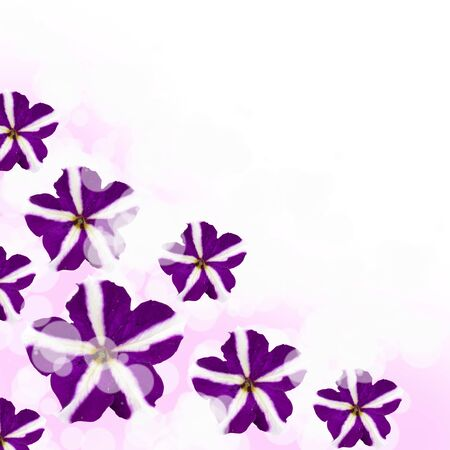 Beautiful flowes on a lilac and white background