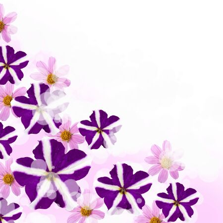 Beautiful flowes on a lilac and white background photo