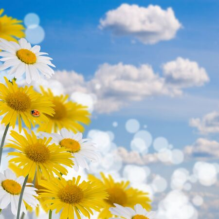 Beautiful yellow and white flowes against the sky photo
