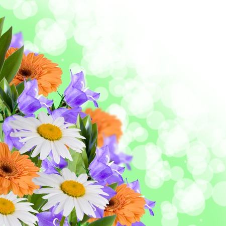 Beautiful flowes on a green abstract background  photo