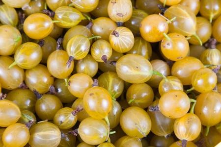 Fresh  gooseberry, berry background Stock Photo
