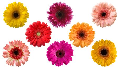Set of gerberas  isolated  on a white background Stock Photo