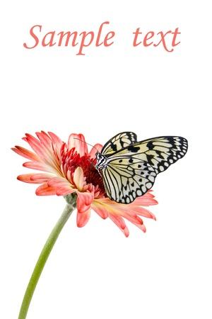 flores peque�as: Mariposa tropical en una flor aislada sobre un fondo blanco