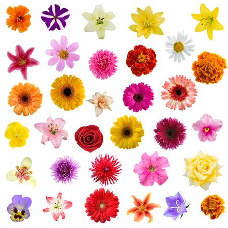 Big collage from flowers on a white background