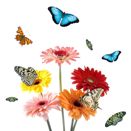 Tropical butterflies on a flowers isolated on a white background photo