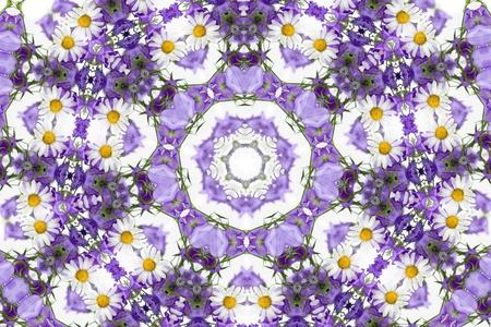 chamomel: Kaleidoscope of beautiful wild flowers, summer flower