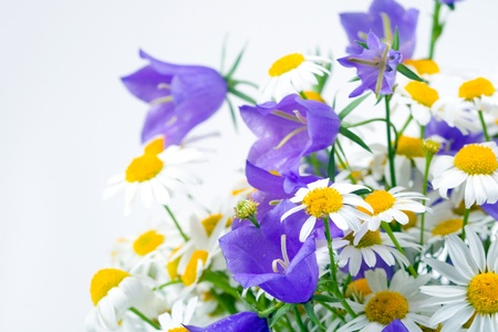 Chamomiles and campanulas on white background, summer flower Stock Photo