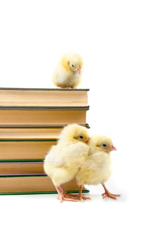 Chickens around books. The concept: new younger generation photo