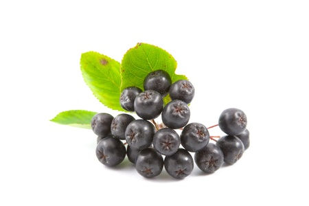 Black Aronia berries on a white background